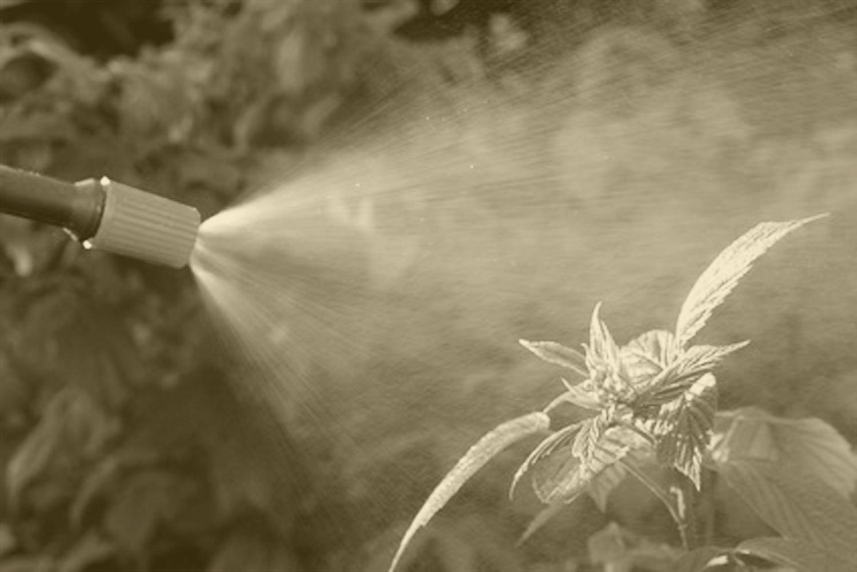 traitemement phytosanitaire maladies végétaux